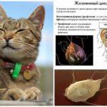 Giardia ở mèo