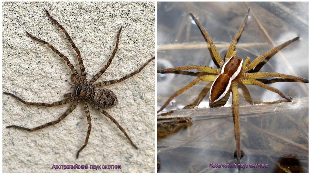 Thợ săn nhện